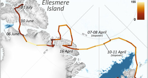 The Incredible Journey of An Arctic Fox Who Walked From Norway to...