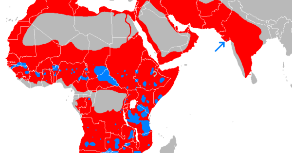 Historic vs Present Geographical Distribution of Lions – Brilliant Maps
