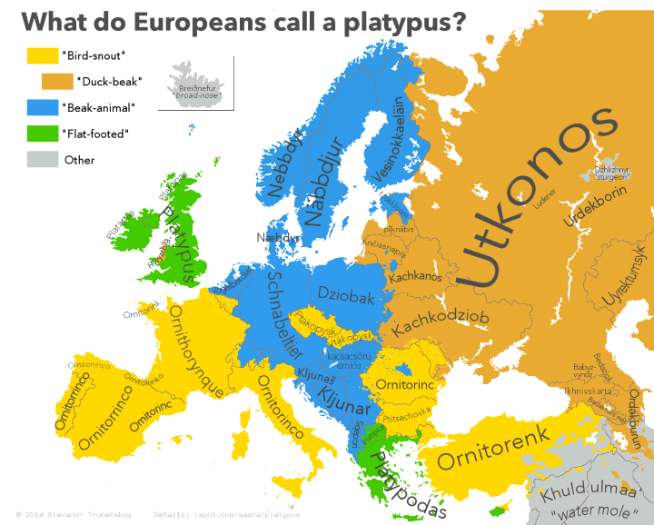 What do Europeans Call a Platypus?