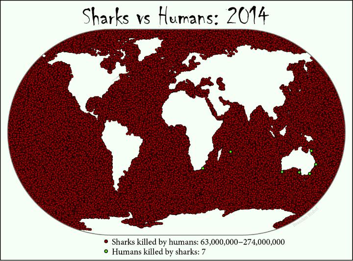 sharks vs humans who really kills who